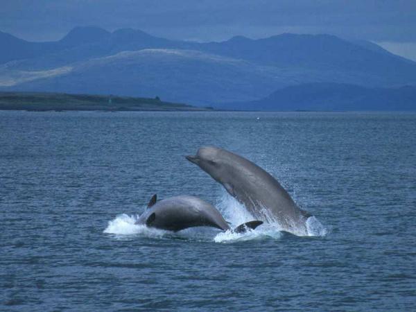 Wal butelkonosy północny